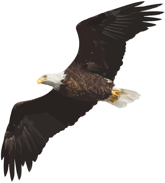 Wings-of-an-Eagle_vectorized